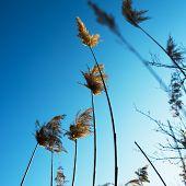 stock photo of prairie  - Dry prairie grass - JPG