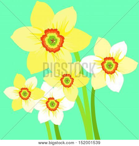 Bouquet Of Yellow Daffodil Flower. Vector Illustration