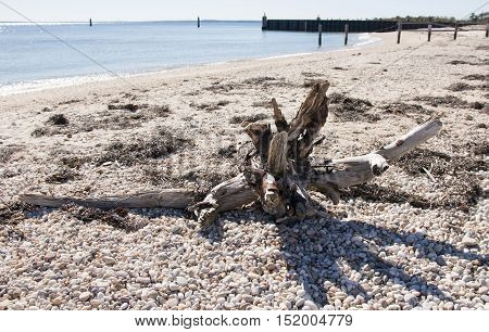 Driftwood sits on a rocky beach in Orient NY