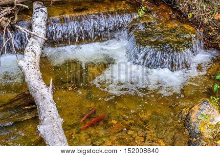 Waterfall in autumn forest at Vancouver, Canada. Hardy Falls, Okanagan Lake, Kelowna.