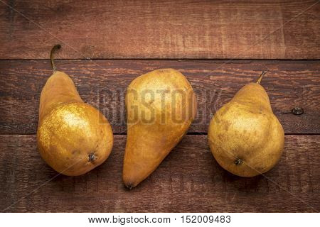 three bosc pears against rustic red painted barn wood
