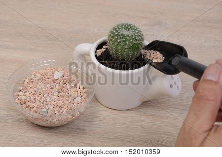 Someone planting small cactus into small pot on wooden background.