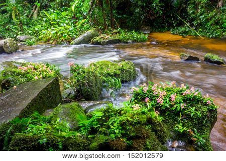 fresh green plant and pink flower on rock in middle Mun Dang Waterfall rain season in Thailand