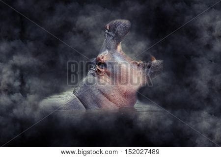 Hippo In Smoke
