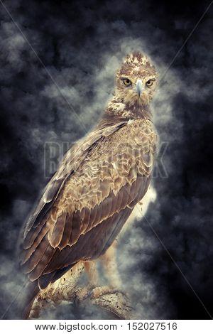 Tawny Eagle In Smoke