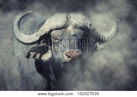 Buffalo In Smoke