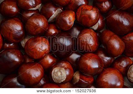 Chestnuts Autumn Background Fall Retro Photo 5