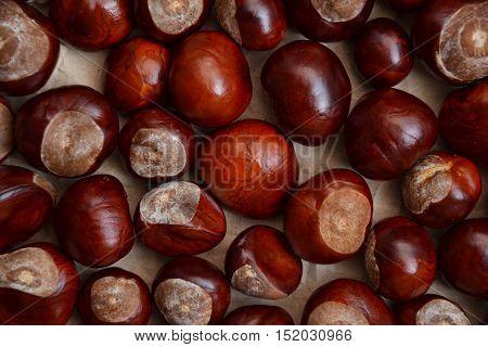 Chestnuts Autumn Background Fall Season Retro Photo 4