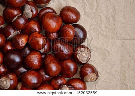 Chestnuts Autumn Background Fall Season Retro Photo 7