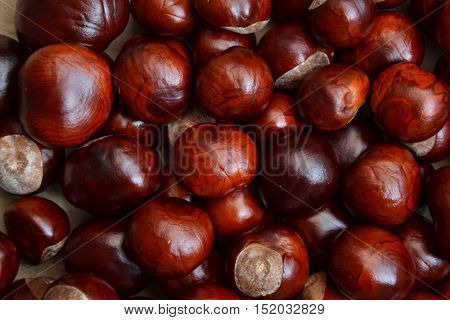 Chestnuts autumn background. Fall season wallpaper. Chestnut tree autumn harvest on grunge vintage texture. Old-fashioned style photo background.