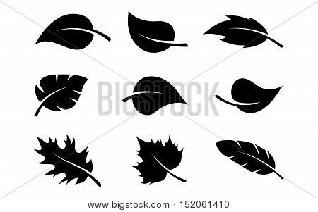 black silhouettes of leaves set isolated on white background. Various shapes of green leaves of trees and plants