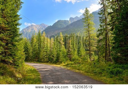 Summer mountain landscape. Asphalt road in a mountain valley with the peaks in the background.