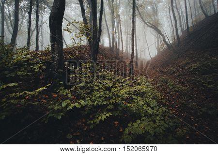 Forest landscape with fog and vegetation after rain
