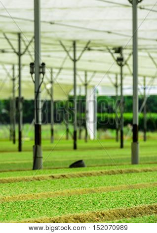 Greenhouse Incubator Of The Salad Chews