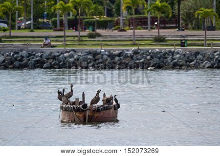 Brown Pelicans Perched On A Small Fishing Boat