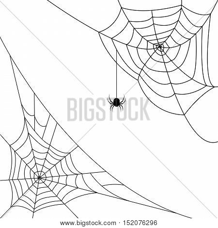 Halloween monochrome spider web and spiders in corners isolated on white background. Hector venom cobweb set. Vector illustration.