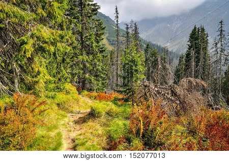 Forest mountain landscape. Mountain trail in beautiful summer scenery.