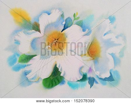 Watercolor painting original realistic white flower of Herald trumpet and green leaves in white background. Original painting