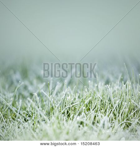 An image of an autumn icy grass