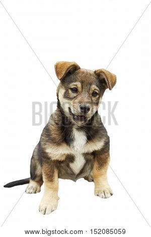cute playful puppy with a funny face on a white isolated background