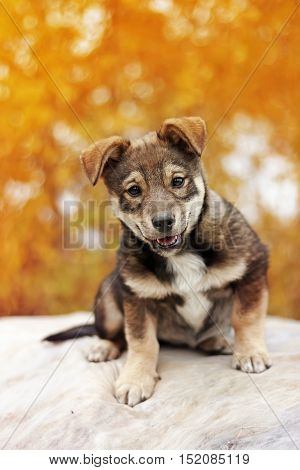 funny puppy with funny face is sitting in autumn Park