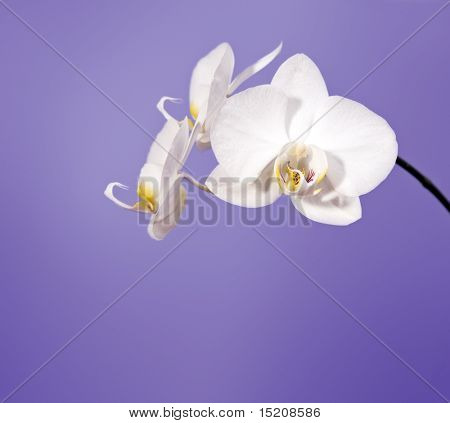 An image of a nice orchid flower