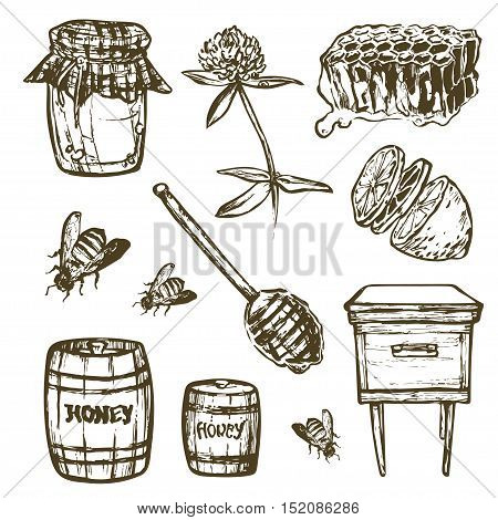 Vector Set with honey elements set. Honey jar spoon stick cells clover beehive bee lemon keg. Illustration for menus, recipes and packages product