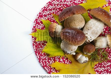 Fresh wild porcini mushrooms (boletus edulis) on red napkin