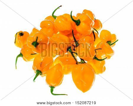 Bunch Of Yellow Orange Ripe Habanero Hot Chili Peppers.