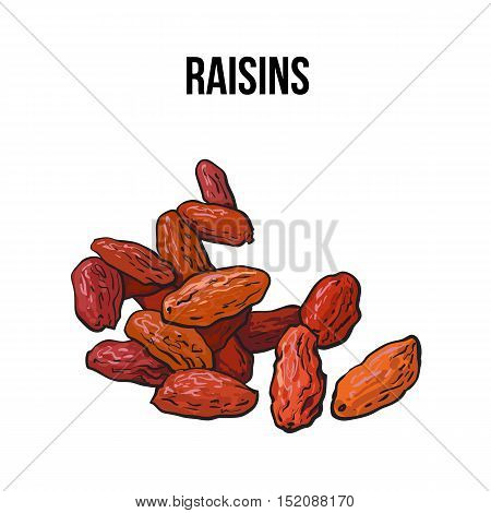 Pile of dried raisins, sketch style vector illustration isolated on white background. Drawing of red, golden raisins, natural sweets, vegetarian snack
