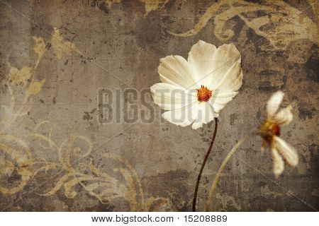 An image of a nice cosmea with space for text