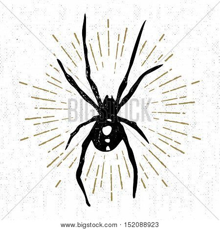 Hand drawn Halloween icon with a textured black widow spider vector illustration.