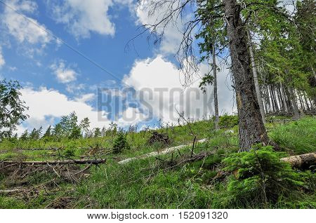 Clear cut forestry in Romanian Carpathians mountains