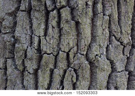 tree bark wood abstract texture with grooves