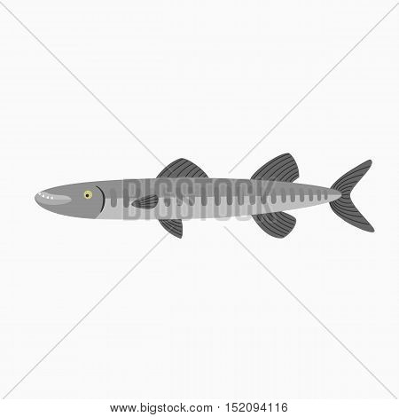 Barracuda. Fish isolated on a white background. Illustration for the children