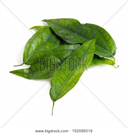 Tiliacora Triandra (bai-ya-nang In Thai Name) Isolated On White Background
