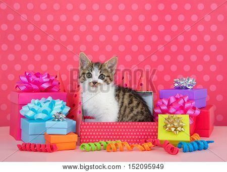 Grey and white tabby kitten pink polka dot birthday party celebrations kitten in box surrounded by colorful presents with bows and party hats behind. Pink polka dot background. Copy Space.