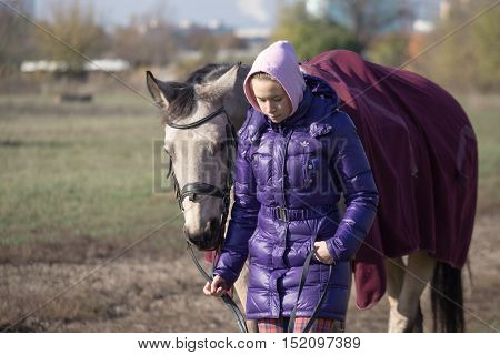 Gomel, Belarus - October 16, 2016: Rider Leads The Horse On A Leash. The Beginning Of Warm-up