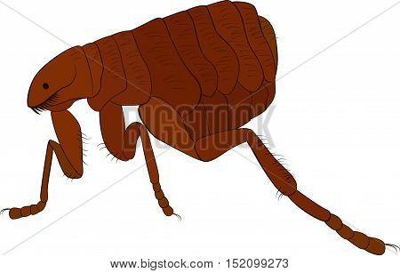 vector cartoon illustration of brown flea isolated on white