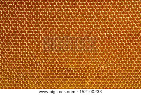 fresh honey in cells. Close up of honeycomb natural background