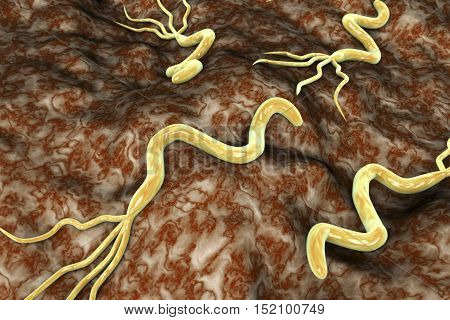 3D illustration of Helicobacter pylori, bacterium which causes gastric and duodenal ulcer
