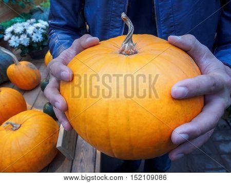 Orange pumpkin in the hands. Big pumpkin in man hands. Yellow pumpkin holding hands.
