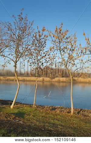 Landscape of frozen lake in sunny weather