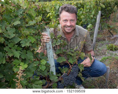 Smiling Winemaker At Family Vineyard Picking Grapes