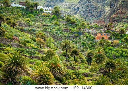 small houses and palm trees in the famous Masca valley Tenerife Canary Islands Spain