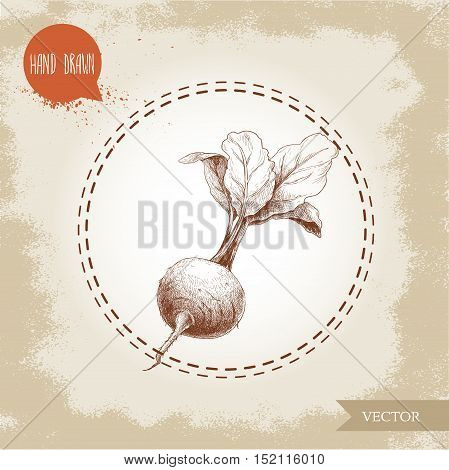 Hand drawn beet root with leafs. Sketch vintage vector illustration.