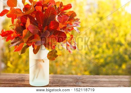 Colorful autumn leaves in a vase, brightly lit background