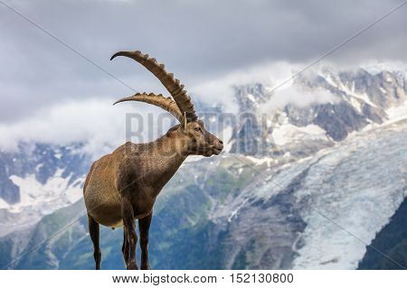 Ibex Range of Mont-Blanc. In background Glacier des Bossons