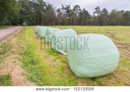 Group of plasticized round hay bales in row on grass land