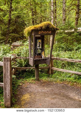 Abandoned Phone booth into the Hoh Rain Forest Olympic National Park USA Washington State